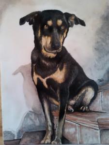 Ritratto di cane - Olio su cartoncino