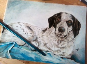Ritratto di cane - Olio su cartoncino Dog portrait - Oil on water paper